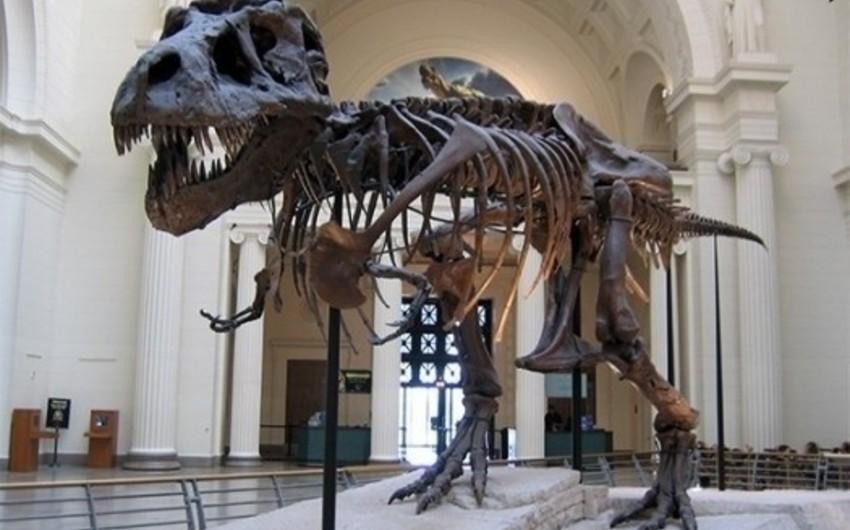 Parisdə dinozavr skeletləri hərracda 1,5 milyon dollara satılacaq