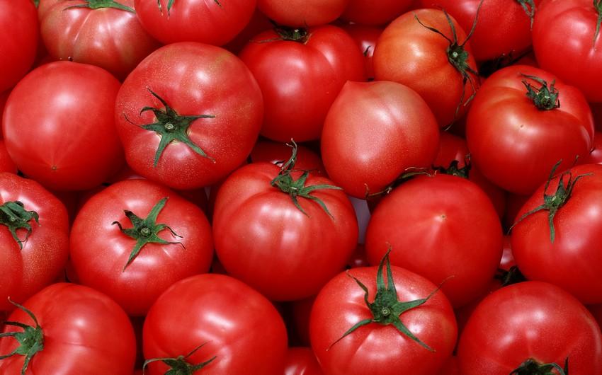 Rusiyaya pomidor və alma ixrac edəcək müəssislər bəlli oldu
