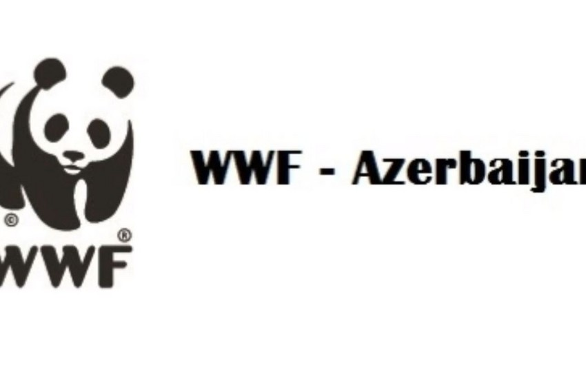 WWF Dağlıq Qarabağda yaşayan canlıları Azərbaycan vasitəsi ilə müdafiə etmək istəyir