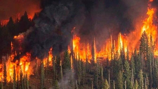 Avstraliyada meşə yanğınları nəticəsində 30-dan çox insan yaralanıb