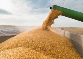 Импорт пшеницы в Азербайджан снизился на 30%