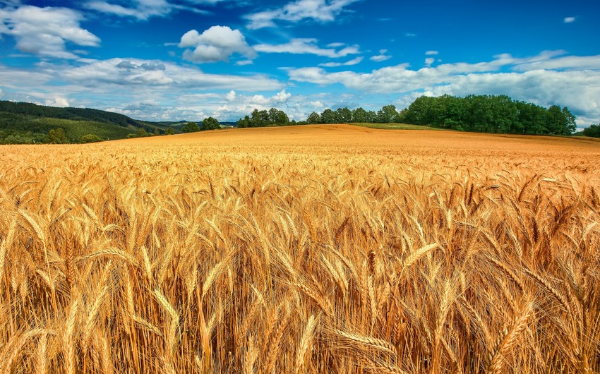 Азербайджан увеличил импорт пшеницы на 16%
