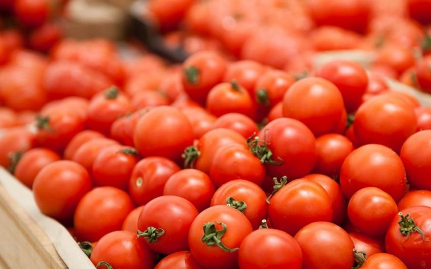 89 müəssisəyə Rusiyaya pomidor ixracına icazə verilib