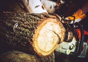 Житель Огуза оштрафован за вырубку деревьев