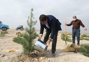 Diplomatic corps representatives plant trees in Tartar