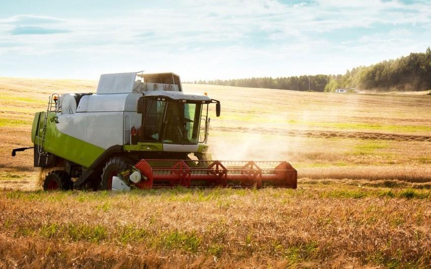 На проекты по производству зерна в Азербайджане выделено 71 млн долларов