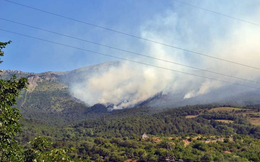 Ministry gave information about forest fire in Sheki