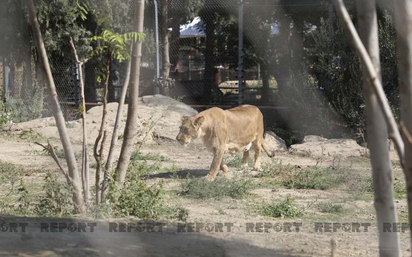 Bakı Zooloji Parkı ziyarətçilər üçün açılıb