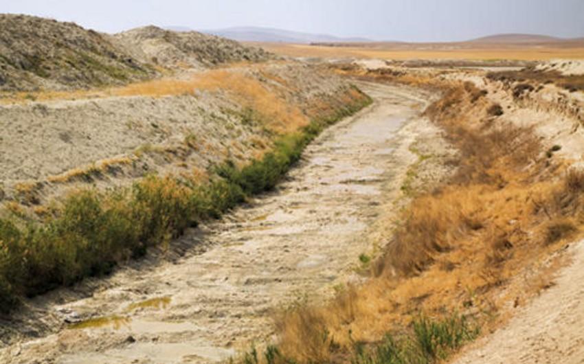 Quraqlıq zamanı zərər çəkən fermerlərin dövlətdən aldıqları toxuma görə yaranan borcları silinəcək
