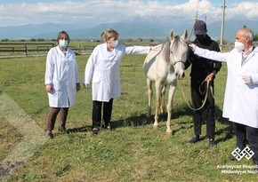 Nazirlik: Şəkidə aclıqdan əziyyət çəkən atlar qida ilə təmin olunub