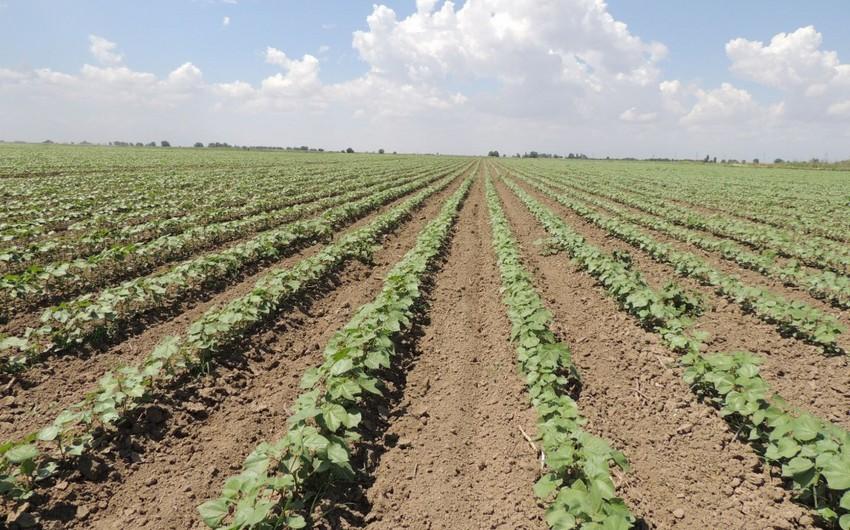 Prezident İlham Əliyev bitkiçilikdə intensiv inkişafın təmin edilməsi ilə bağlı sərəncam imzalayıb