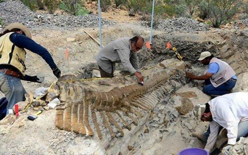 Fransada 90 milyon il əvvəl yaşamış sürünənin qalıqları tapılıb