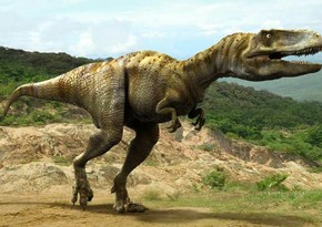 Uelsdə dördyaşlı qız 200 milyon il yaşı olan dinozavrın izini tapdı