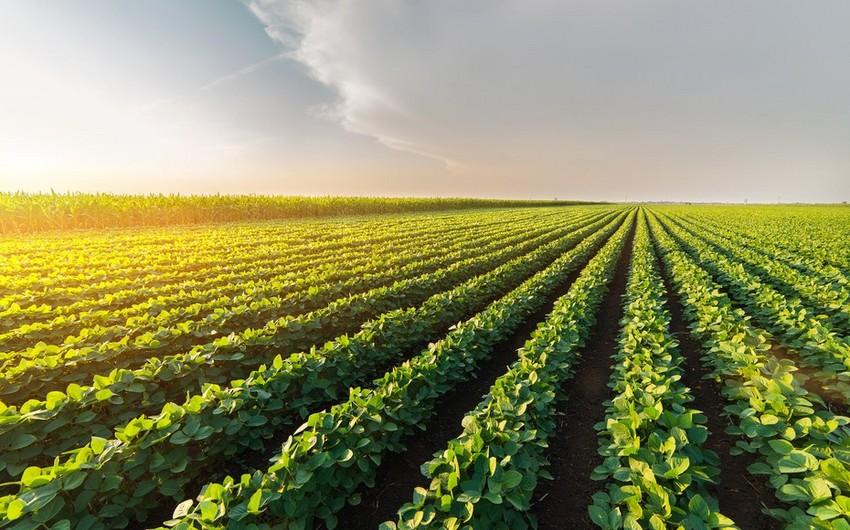 EU allocates grant to agrarian sector in Azerbaijan