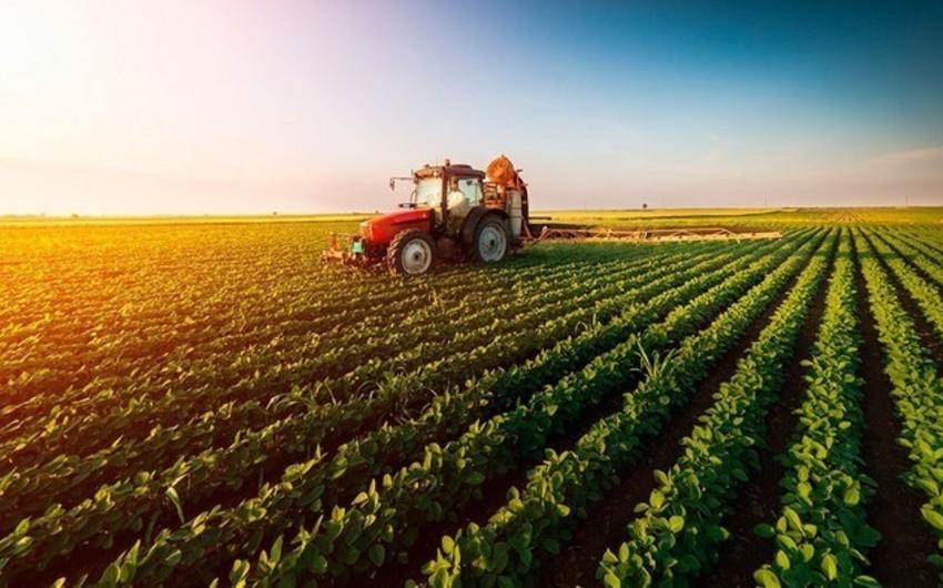 В Азербайджане в этом году будет готов статистический портал по аграрной сфере