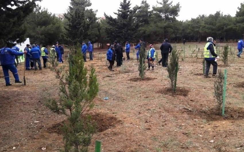 ETSN Ağdaşda ağacəkmə aksiyası keçirib