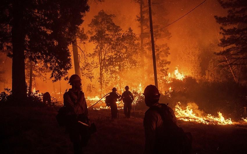 Kaliforniyada 44 nəfər meşə yanğınlarının qurbanı olub - VİDEO