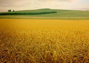 Казахстан с начала 2020/21 сельхозгода увеличил экспорт зерна на 17%