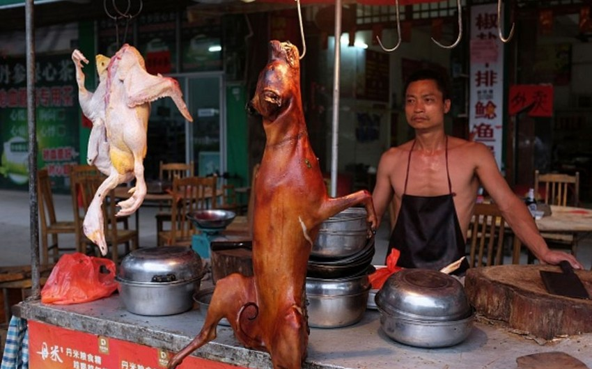 Çinin bir şəhərində it və pişik ətinin satışı qadağan edilir
