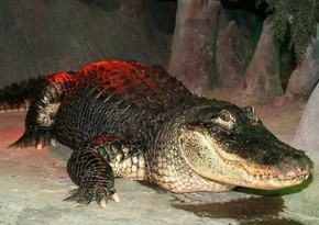 84-year-old alligator dies at Moscow Zoo