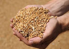 Belarus temporarily bans grain exports