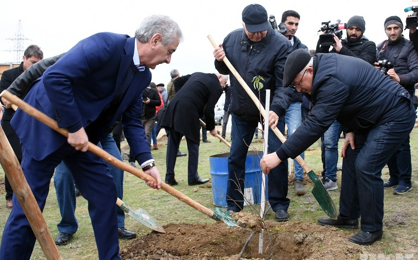Deputy Prime Minister: Trees planted today to improve ecological condition of Azerbaijan