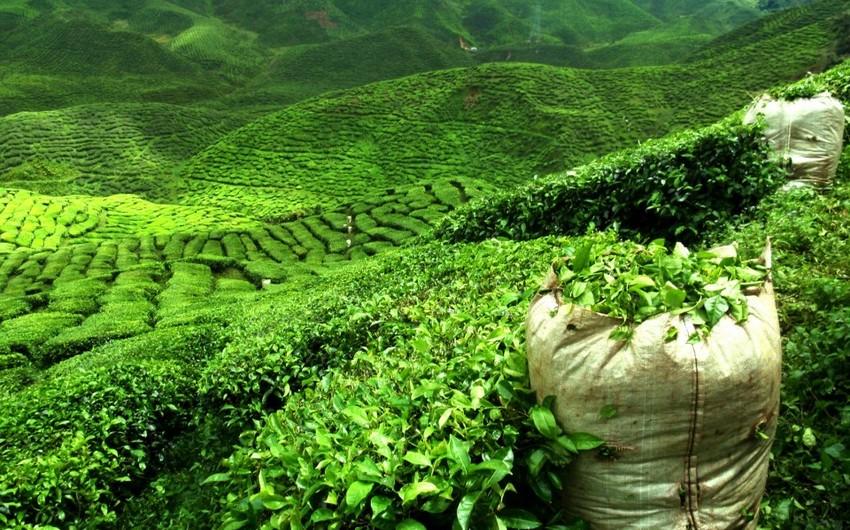 """""""Astara Çay-1""""-in seçkili orqanları yenidən formalaşdırılacaq"""