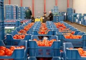 Rusiyalı mütəxəssislər Azərbaycandakı pomidor istehsalı müəssisələrini yoxlayacaq