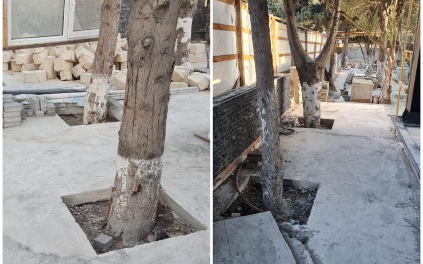 ETSN: Tikinti aparılan ərazidəki ağaclar sayılaraq nəzarətə götürülüb