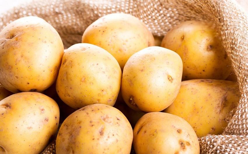 Kartofu düzgün saxlamadıqda hansı xəstəliklərə səbəb olur?