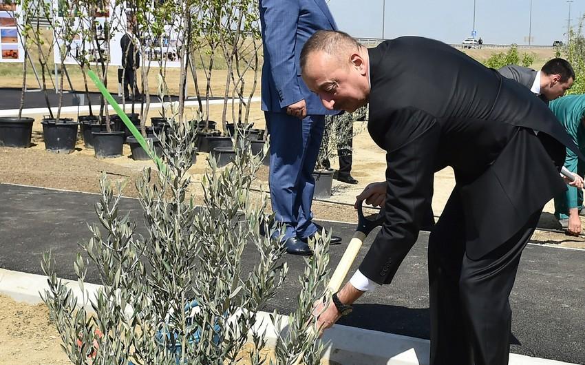 Prezident İlham Əliyev ulu öndər Heydər Əliyevin doğum gününə həsr olunan ağacəkmə aksiyasında iştirak edib - YENİLƏNİB