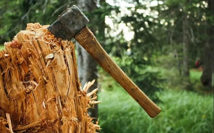 В Баку рассмотрели жалобу по поводу вырубки деревьев