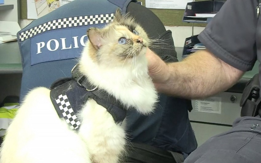 A cat joins New Zealand police team
