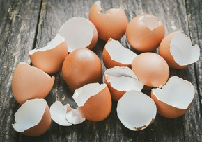 Scientists create a surgical material from eggshells