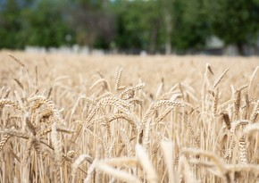 Azerbaijan reduces wheat import