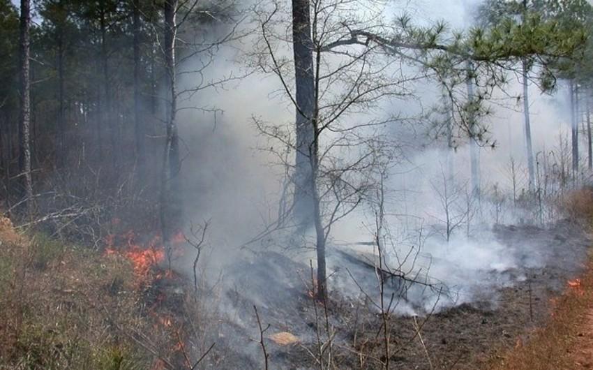 Rusiyada meşə yanğınlarının sahəsi genişlənib