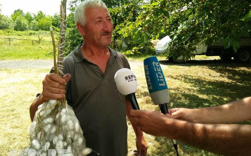 Media nümayəndələri Qax və Şəkidə baramaçılıqla tanış olublar - FOTO