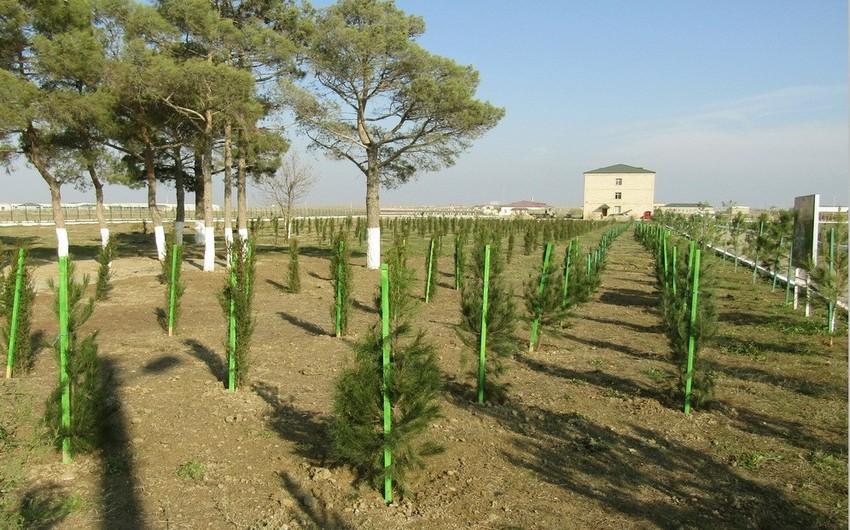 Azərbaycan Ordusunda ağacəkmə aksiyası davam edir