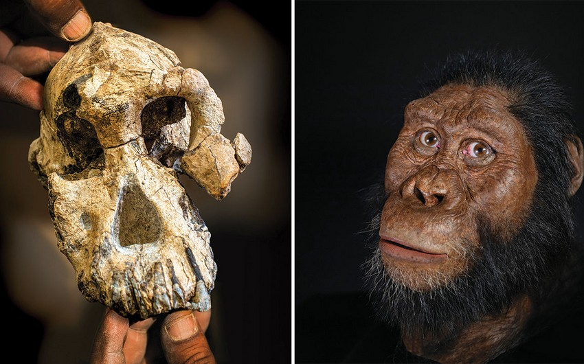 Ученые обнаружили древнейшего родственника человека