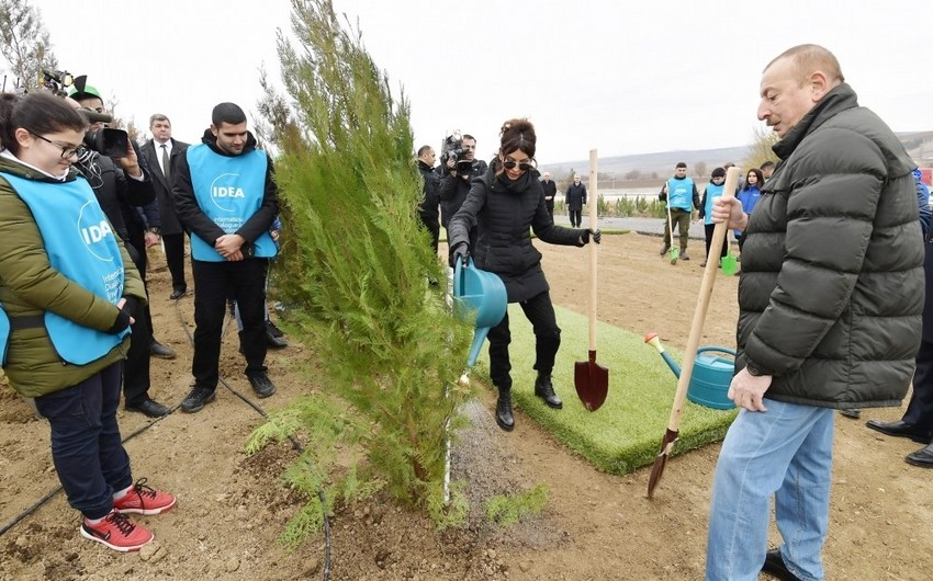 Президент Ильхам Алиев и первая леди Мехрибан Алиева приняли участие в акции по посадке деревьев в Шамахинском районе - ОБНОВЛЕНО - ФОТО