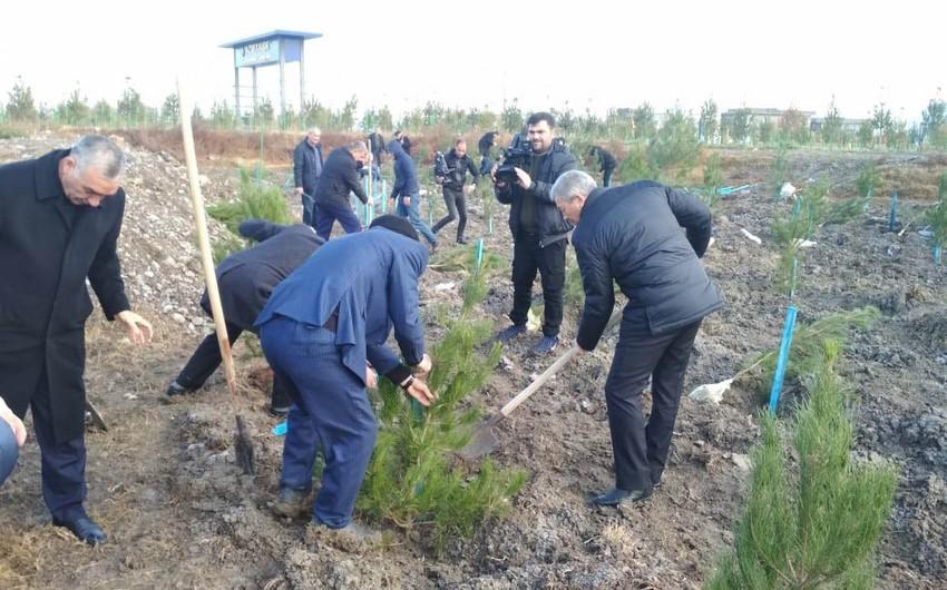 Bərdədə ağacəkmə aksiyası keçirilib - FOTO