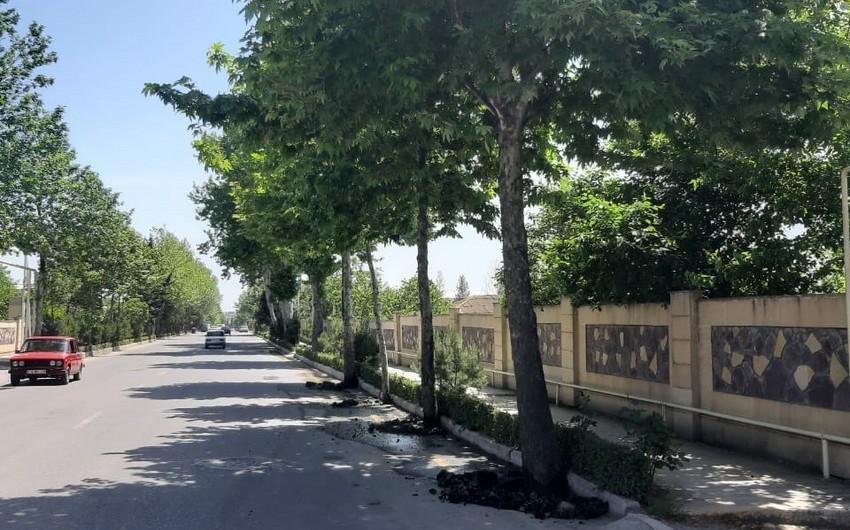 Azərbaycanda daha bir bələdiyyə sədri cəzalandırıldı