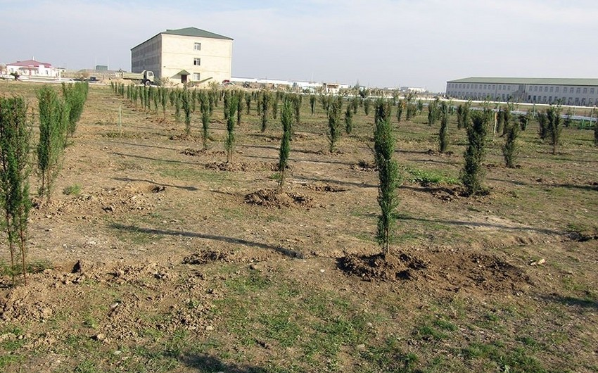 Azərbaycan Ordusu 200 mindən çox ağac əkəcək